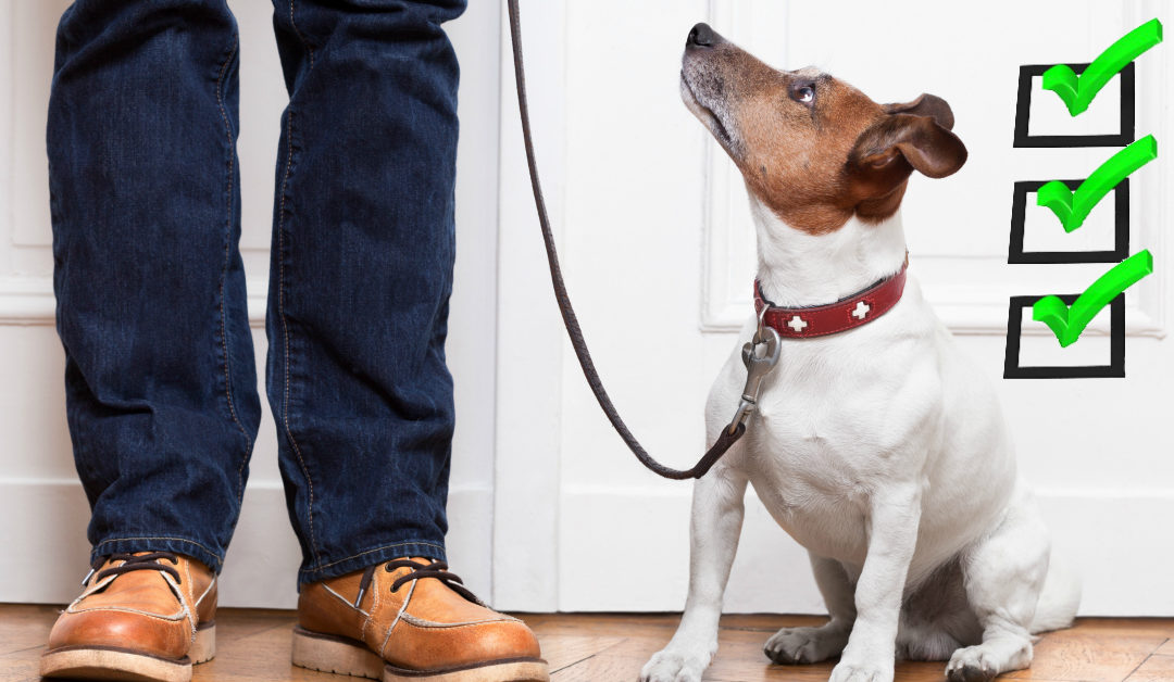 Before You Reward Your Dog, Check These 3 Boxes