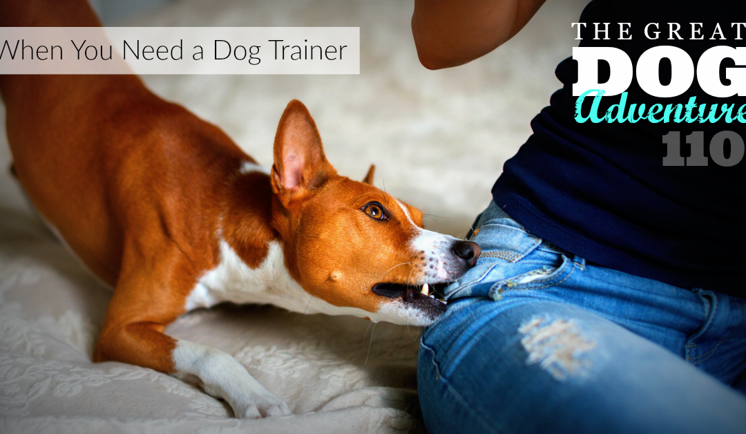 GDA110: When You Need a Dog Trainer