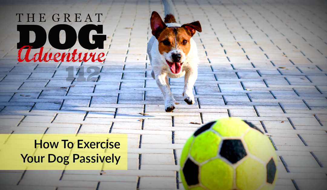GDA112: How To Exercise Your Dog Passively
