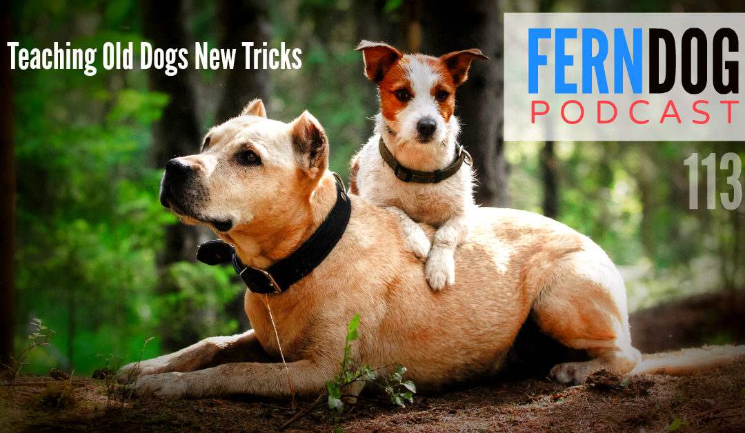 FernDog113: Teaching Old Dogs New Tricks