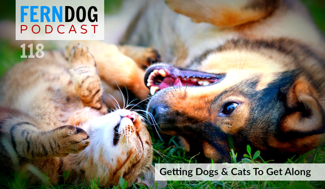 FernDog118: Getting Dogs and Cats To Get Along