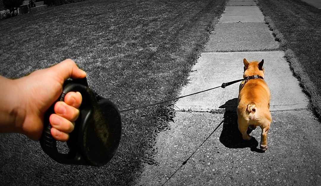 Why Retractable Leashes Are Bad For Your Dog