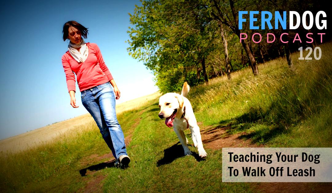 FernDog120: Teaching Your Dog To Walk Off Leash