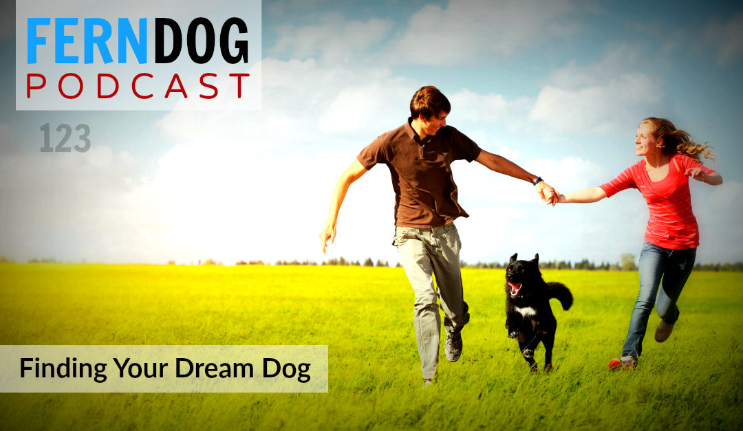 FernDog123: Finding Your Dream Dog