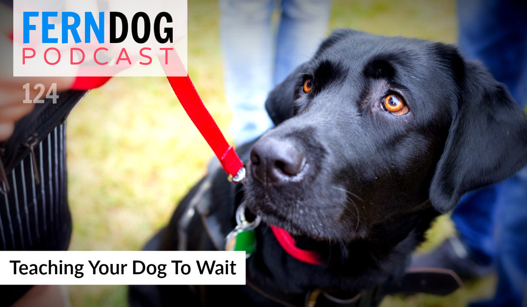 FernDog124: Teaching Your Dog To Wait