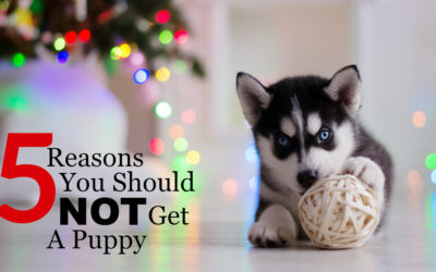 5 Reasons You Should NOT Get A Puppy