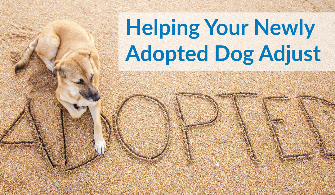 Helping Your Newly Adopted Dog Adjust