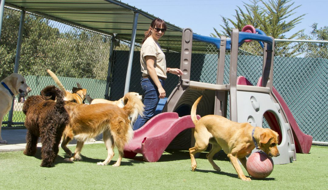 The Truth About Dog Daycare
