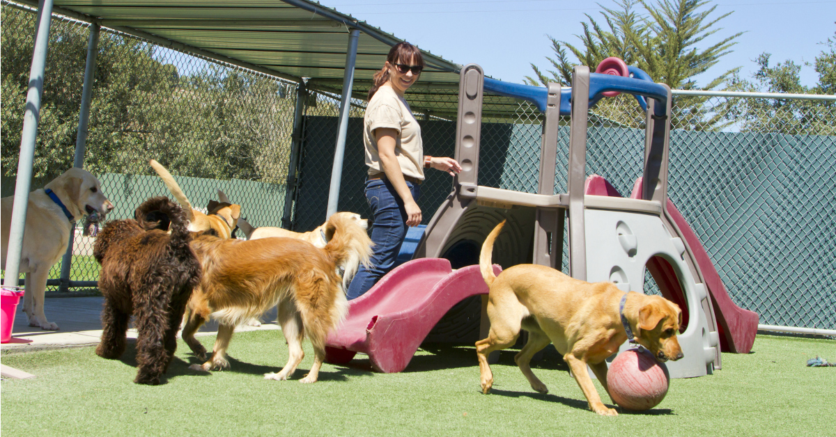 The Truth About Dog Daycare Ferndog Training,Cheapest City To Buy A House In Arizona