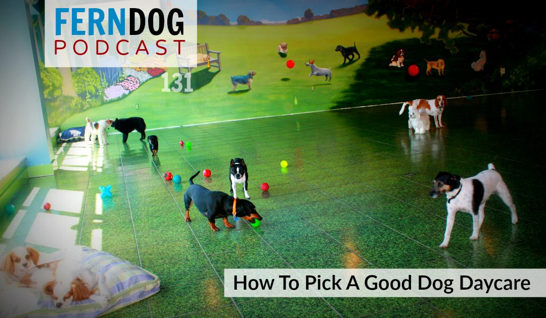 FernDog131: How To Pick A Good Dog Daycare