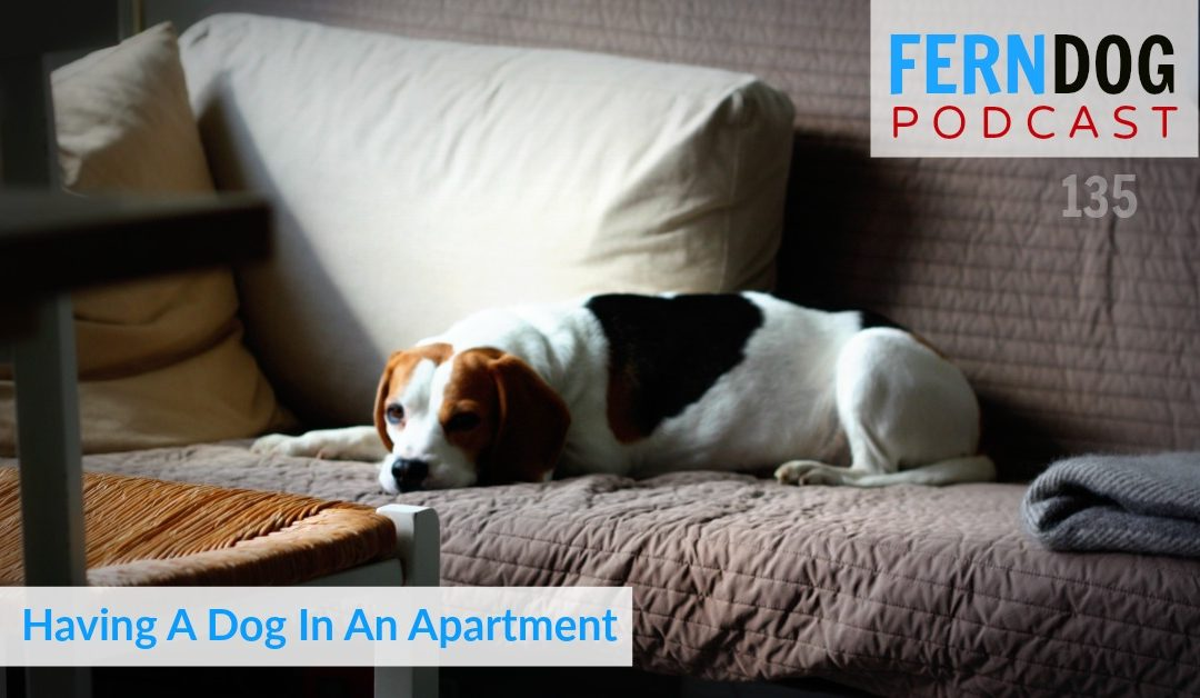 FernDog135: Having a Dog in An Apartment