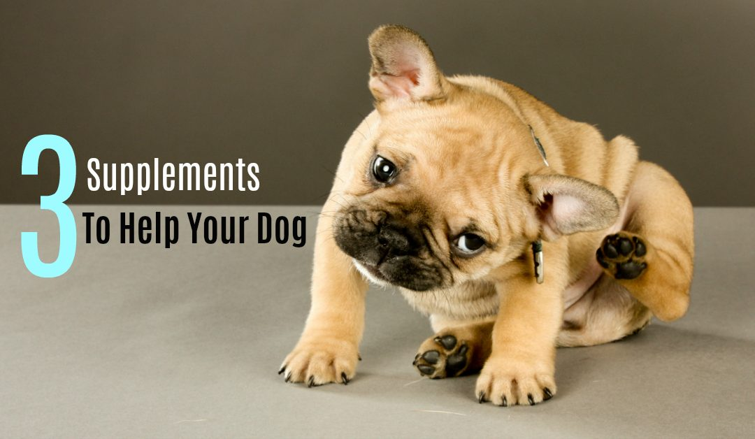 3 Supplements To Help Your Dog Live A Happier & Healthier Life