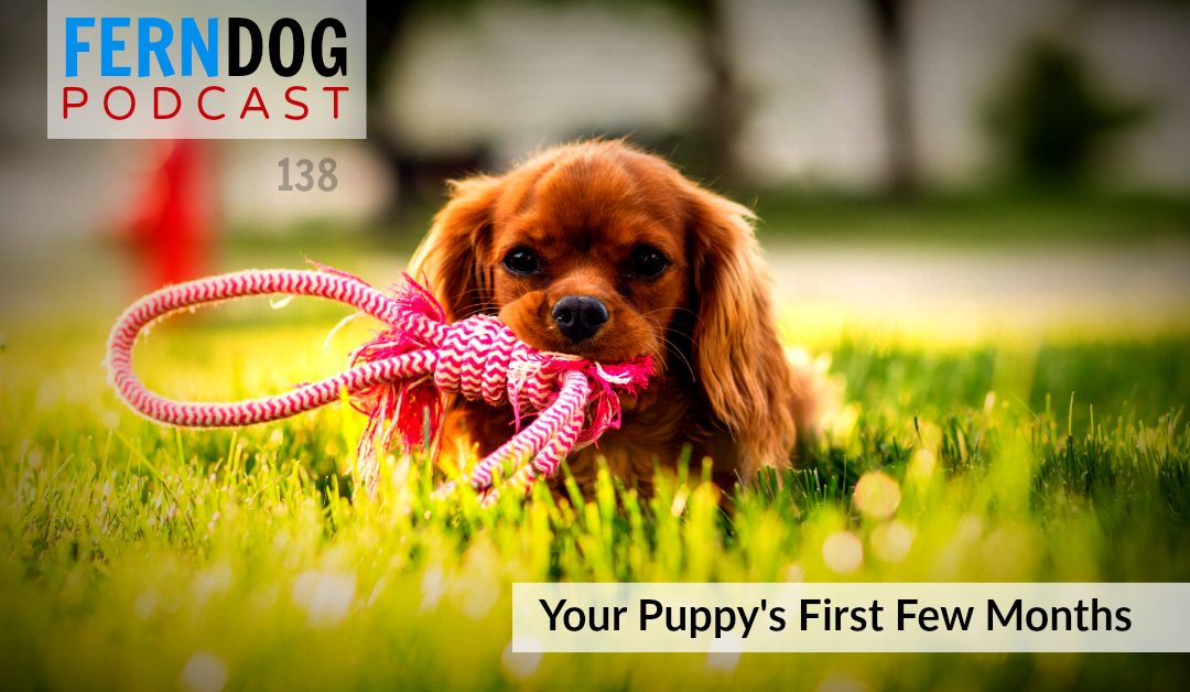 FernDog138: Your Puppies First Few Months