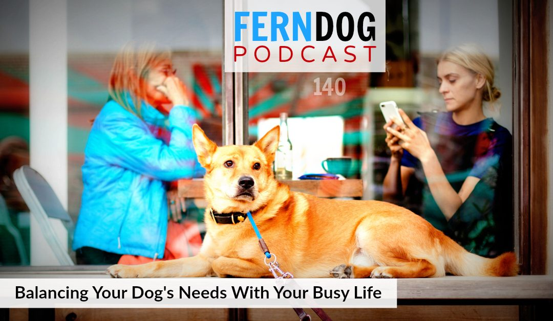 FernDog140: Balancing Your Dog's Needs With Your Busy Life