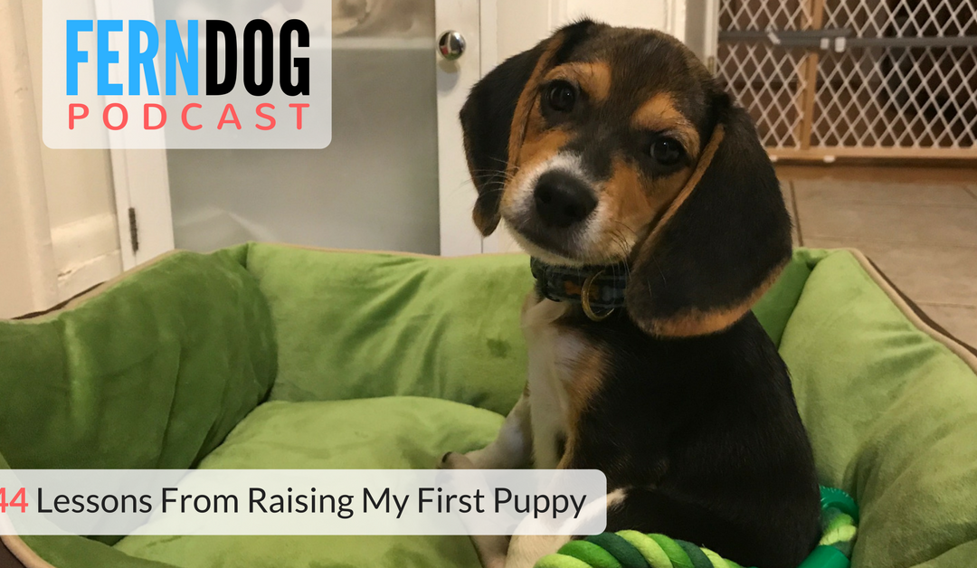 FernDog144: Lessons From Raising My First Puppy