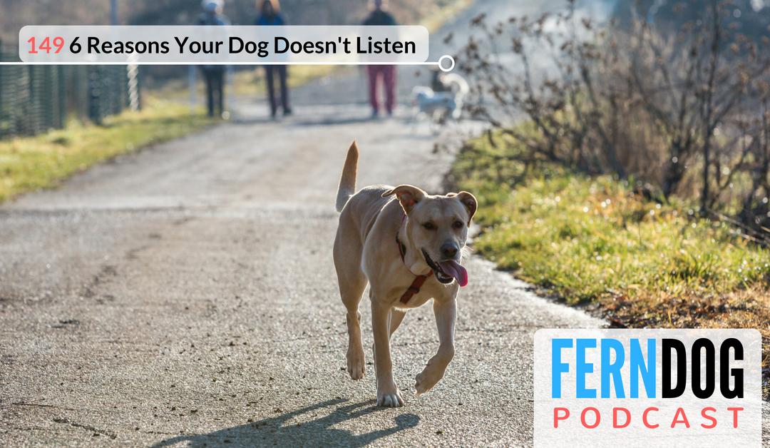 FernDog149: 6 Reasons Why Your Dog Doesn't Listen