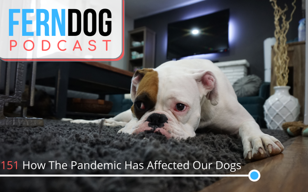 FernDog151: How The Pandemic Has Affected Our Dogs