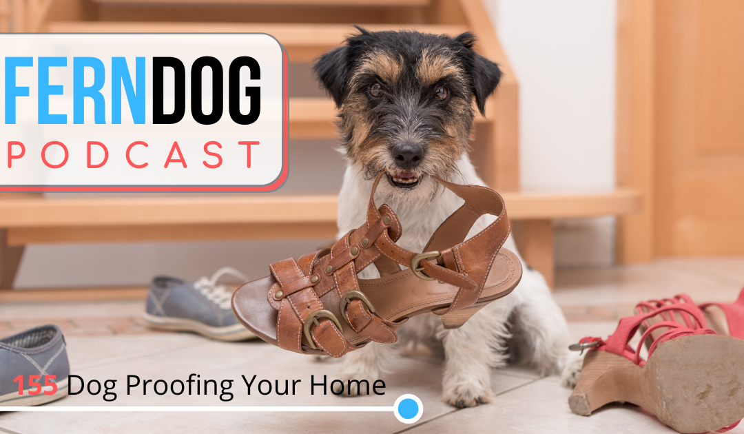 FernDog 155: Dog Proofing Your Home